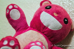 365 Project Year 3 - 146.jpg (tharn photography) Tags: pink arizona color phoenix stuffed places teddybear stuffedanimal 2470l ahwatukee huggable descriptive 365project canon6d tharnphotography battlebears battlebear