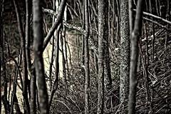 Prigione d'alberi