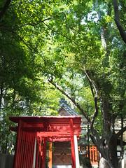 (Neconote) Tags: japan tokyo shrine olympus torii omd fukagawa tomiokahachimangu 1250mm em5 f3563 mzuiko eishofiveinarishrine