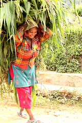 A woman carries a bundle of corn (World Bank Photo Collection) Tags: nepal food woman vegetables walking corn women walk agriculture gender carry worldbank equality carrying southasia