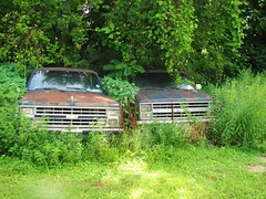 OLD SUBURBANS IN THE WEEDS (richie 59) Tags: city trees summer urban usa chevrolet overgrown america outside us weeds rust automobile gm unitedstates 4x4 suburban rusty headlights grill kingston vehicles faded chevy rusted vehicle newyorkstate suv automobiles 4wheeldrive chevys wornout nystate fourwheeldrive generalmotors hudsonvalley kingstonny motorvehicles fadedpaint ulstercounty oldchevy motorvehicle 4door smallcity midhudsonvalley 2013 chevysuburban fourdoor ulstercountyny rustychevy oldchevys bluesuv 2010s chevysuv americansuv 1986chevy gmsuv richie59 july2013 1983chevy ussuv 1980ssuv rustysuv july272013 1983chevysuburban 1983suburban 1986chevysuburban 1986suburban