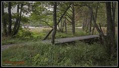 Grefstadvika, Fevik (Øyvind Bjerkholt (Thanks for 57 million+ views)) Tags: bridge nature water beautiful norway canon landscape eos norge soe sørlandet grimstad 600d austagder cs6 fevik grefstadvika