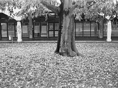 Milano (Valt3r Rav3ra - DEVOted!) Tags: autumn blackandwhite bw film 35mm milano streetphotography ilfordhp5 autunno biancoenero ricoh500g barona analogico urbanvisions fotodistrada visioniurbane valt3r valterravera