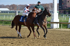 "2012-11-16 (29) r1 (JLeeFleenor) Tags: photos photography marylandracing marylandhorseracing md jockey جُوكِي ""赛马骑师"" jinete ""競馬騎手"" dżokej jocheu คนขี่ม้าแข่ง jóquei žokej kilparatsastaja rennreiter fantino ""경마 기수"" жокей jokey người horses thoroughbreds equine equestrian cheval cavalo cavallo cavall caballo pferd paard perd hevonen hest hestur cal kon konj beygir capall ceffyl cuddy yarraman faras alogo soos kuda uma pfeerd koin حصان кон 马 häst άλογο סוס घोड़ा 馬 koń лошадь horseracing thoroughbredracing laurelpark maryland"