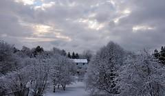 SNOW (khoosh) Tags: trees snow toronto ice nature moments khashayar