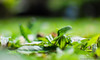(Bruno R.B S.) Tags: brazil plant verde green planta grass brasil 35mm lens nikon focus dof ground grama sp chão paulo nikkor f18 sao são d40