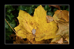 """Feuille """"2013"""" (Christian Labeaune) Tags: france feuille 2013 bourgognectedor chatillonsurseine21400 christianlabeaune"""