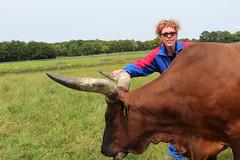 Toesi my Pride (excellentzebu1050) Tags: closeup cow cattle farm watusi ankole ankolewatusi ankolecattle animails africancattle takenwithlove watoesicattle mygearandme flickrstruereflection1 thegoldenachievement