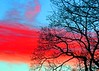 Sunset Tree Colour Enh (Daisy Waring World) Tags: blue sunset red torquoise branchsilhouette