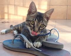 IMG_2206 (Listen to music ,smile and let it be...) Tags: pet cat kitten mascota gatito