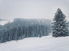 Powder days (Danielle Alise Photography) Tags: trees pine colorado skiing beavercreek powderdays