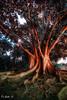 Tiempo/Time (Di Gutti (diegogutierrez79@gmail.com)) Tags: sunset tree arbol atardecer sevilla seville andalucia andalusia ocaso hdr gettyimages andalousie sevilha siviglia raices parquedemarialuisa sevillan canoneos450d tokina1116 diegogutiérrez sevillában digutti