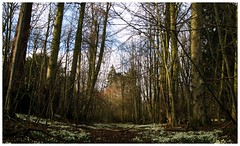 Millers Crossing (FearfulStills) Tags: sunlight nature woodland countryside walks path hidden snowdrops