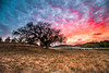 She Didn't Believe (Extra Medium) Tags: sunset grass clouds nationalpark oaktree thousandoaks newburypark ranchosierravista nikond4 leefoundationkit singhrayrgnd satiwawa leewideangleadapter