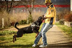 Verspielt (Tekke) Tags: dog berlin deutschland action hund haustier tier spielen mensch spazierengehen 70200mm28 gassigehen nikond800