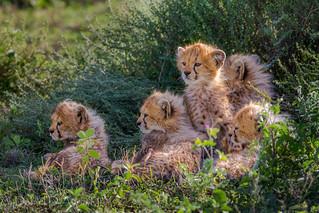 Five Little Kittens...4857
