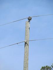 Power (Josh Rich (boysquadxyz)) Tags: pole powerlines southernpineepa