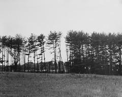 (Lesley Rivera) Tags: white black darkroom landscape large baltimore 4x5 format ilford