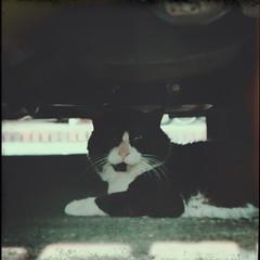 Cat under a car (central-hi) Tags: cat sony injury cybershot qx100 lightboxr