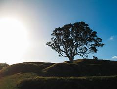 041 - L'arbre Solitaire