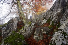 The mountaineer (Hector Prada) Tags: bosque otoño montañero naturaleza niebla rocas forest autumn nature fog mist rocks leaf moss hectorprada