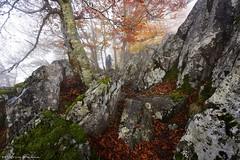 The mountaineer (Hector Prada) Tags: bosque otoño montañero naturaleza niebla rocas forest autumn nature fog mist rocks leaf moss hectorprada