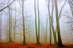 Misty forest (Marco Allegro) Tags: winter fog forest tree nature misty gloomy italy