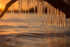 chasing ice (Marc McDermott) Tags: ice winter cold water sunset beautiful reflection icicles sky shallow depth field canada ontario tree branch ripple wave calm evening marc mcdermott ef70200mmf28lisiiusm