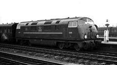 Railways - D809 Champion arriving at Swindon (Biffo1944) Tags: swindon champion railway warship class 42 d809