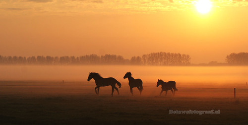 Wild west in Holland