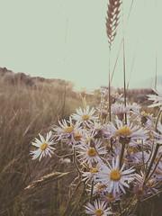 An evening walk (cjazzlee) Tags: light sunset vscocam uploaded:by=flickrmobile flickriosapp:filter=nofilter