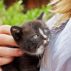 Frische Katze! (Mike Bonitz) Tags: baby cat germany deutschland jung young katze seena saxonyanhalt sachsenanhalt eckartsberga