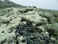 lighthouse evening 04 (donovanbeeson) Tags: mist moss rocks cliffs lichen inverness ptreyes
