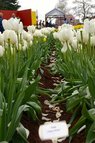 Tiptoe through the Tulips in Monbulk