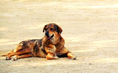 (schonrockg) Tags: dog beautiful beauty animal landscape temple athens greece zeus flickrandroidapp:filter=none