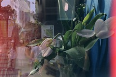 (RUN! Saturday) Tags: flowers film lca russia doubleexposure taiwan taichung taipei filmphotograph