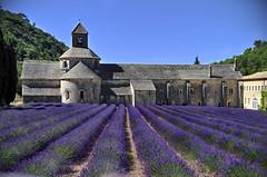 Tappeto di lavanda (Celeste Messina) Tags: nature abbey nikon purple postcard violet natura lavander provence viola paesaggio cartolina lilla provenza lavanda abbazia meraviglioso sénanque d5000 abbacy