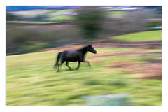 asturcn (Ramn Medina) Tags: horse blur caballo icm movido asturcn intentionalcameramovement