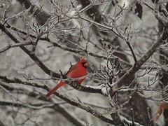 winter wild snow bird nature feeding southcarolina