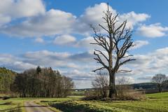 Der Asket   (Explored) (fotomanni.de) Tags: himmel wolken blau baum