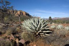 Arizona (Picture This1 .) Tags: arizona nature wildlife bluesky sadona
