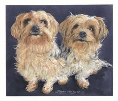 "Two Yorkies Portrait • <a style=""font-size:0.8em;"" href=""http://www.flickr.com/photos/64357681@N04/13110000823/"" target=""_blank"">View on Flickr</a>"