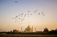 Departed Souls (Madhusudanan Parthasarathy) Tags: sunset india history up birds architecture evening flying nikon ngc sigma taj tajmahal agra mosque 1020mm sevenwonders goldenlight mughal thetaj uttarpradesh deaprted tajmehel d5100 wonderofindia madhusudananparthasarathy shajaghan