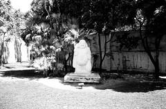 Ichimura Japanese Garden (Phillip Pessar) Tags: from camera bw white black film analog 35mm garden island japanese store florida zoom kodak miami infinity tx trix olympus x thrift 400 watson tri 70 ichimura