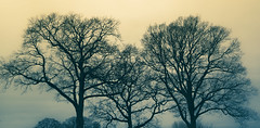Chrome skies (Coisroux) Tags: horizon foggy haze chrome serene silhouette skyline warwickshire countryside morning dusk softness panorama shadows treeline d5500 nikond dramatic majestic landscape lucid mysterious mystery branches