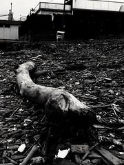 B&N (lucianoserra490) Tags: maredinverno biancoenero legno spiaggia