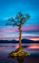 Loch Lomond (debraduncan1960) Tags: lone tree sunset loch lomond