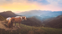 A couple (Dejan Hudoletnjak) Tags: landscape nature horses couples horse panorama sunrise sun colorfulsky colorful slovenia slovenija