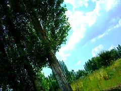 Turkey-Afyonkarahisar (Betül DOĞAN) Tags: sky blue azul green verde tree naturaleza nature turkey turquia türkiye afyonkarahisar