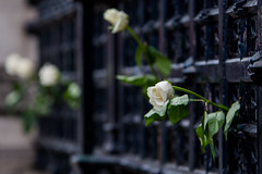 5T9W5321 (sinister pictures) Tags: candlelit vigil rememberance westminster terrorattack victims terrorism london uk england unitedkingdon gbr